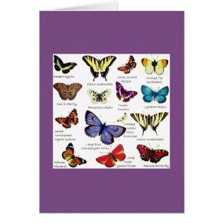 Butterfly Full Color Illustrations popular types Card