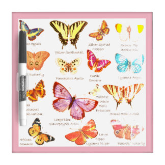 Butterfly Full Color Illustrations popular types Dry Erase Board