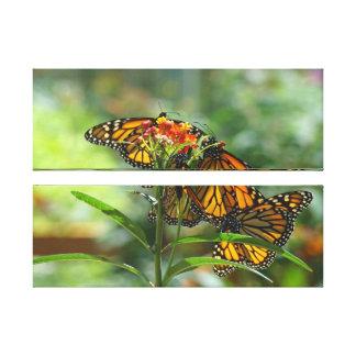 Butterfly Garden Canvas prints Monarch Butterflies