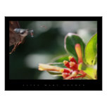 BUTTERFLY GARDEN POSTERS