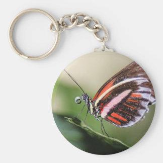 Butterfly Identification Keychain