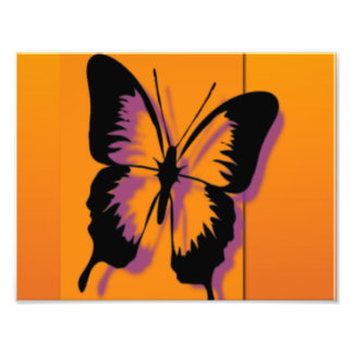 Butterfly in Orange Photograph