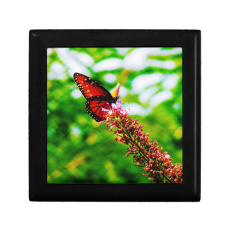 Butterfly Jewelry/Gift Box (small) Small Square Gift Box