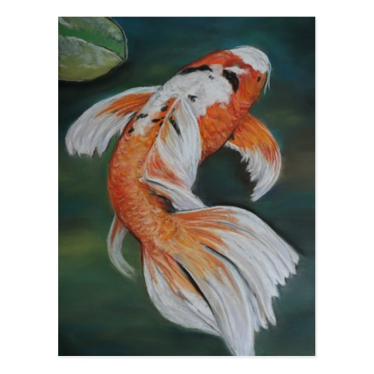 Butterfly koi fish art postcard for Butterfly koi fish