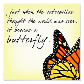 Butterfly Life Struggle Inspirational Quotes Photographic Print