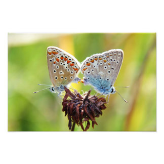 Butterfly Love Photographic Print