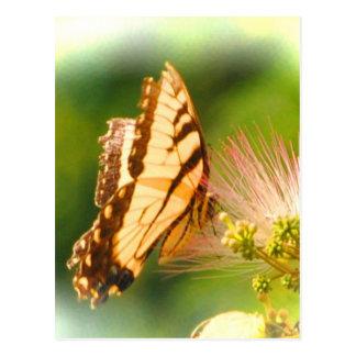 butterfly mimosa tree postcard