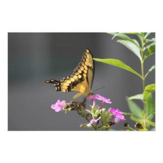 Butterfly 'N' Flowers Photo