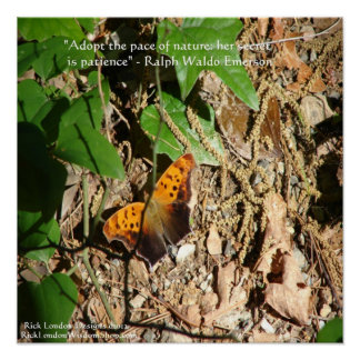 Butterfly/Nature Graphic Poster With Ralph Waldo E