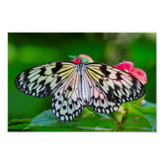 Butterfly Nature Photo Wildlife Poster