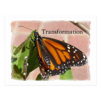 Butterfly Of Transformation Postcard