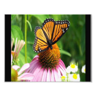 Butterfly on a Cone Flower Photo Print