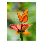 Butterfly on a Flower Postcard