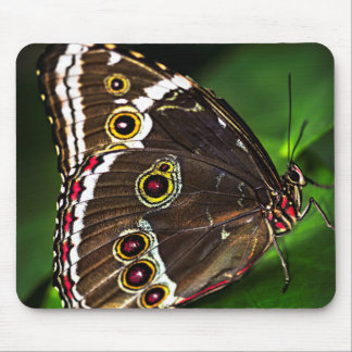 Butterfly on a plant mouse pad