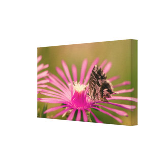Butterfly on a purple wild flower canvas print