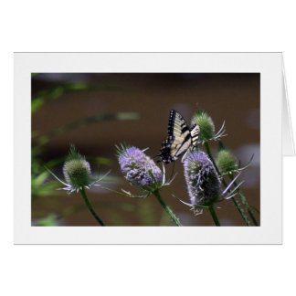 Butterfly on a Thistle Card