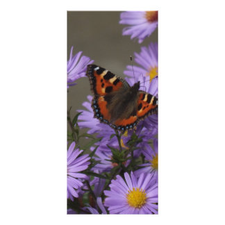 Butterfly on Asters Rack Card