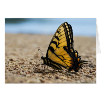 Butterfly on Beach Card