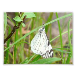 Butterfly on Blade of Grass Art Photo