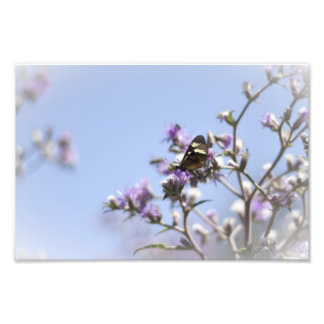 Butterfly on Blossom Branch Photo Print
