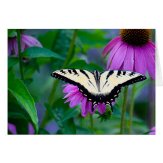 Butterfly on Coneflower Card