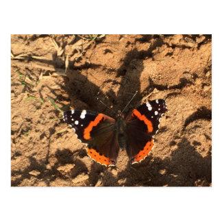 butterfly on dirt postcard