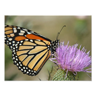 Butterfly on Flower Art Photo