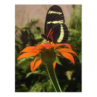 Butterfly on flower postcard