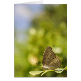 Butterfly on green leaf Greeting Cards