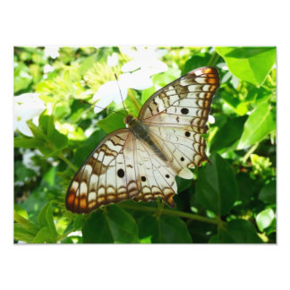 Butterfly on Jasmine Tropical Nature Photography Photo Art