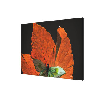 Butterfly on leaf 3 gallery wrap canvas