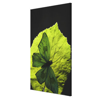 Butterfly on leaf gallery wrap canvas