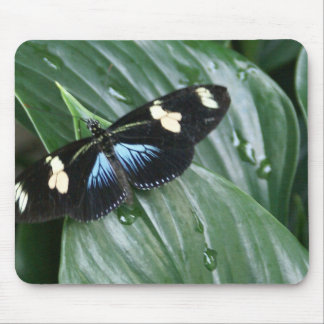 Butterfly on Leaf Mouse Pad