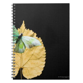 Butterfly on leaf notebooks