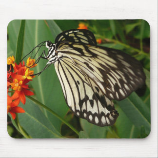 Butterfly on Orange Flower Mouse Pad