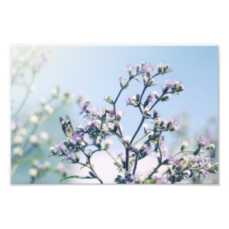 Butterfly on purple blossom branch photographic print