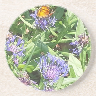 Butterfly on Purple Coneflower Coaster