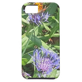 Butterfly on Purple Coneflower iPhone 5 Cases