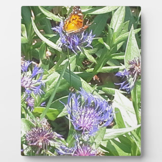Butterfly on Purple Coneflower Plaque