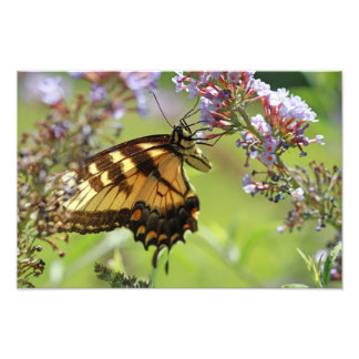 Butterfly on Purple Flowers Photograph