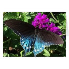 Butterfly on Purple Verbena Greeting Card