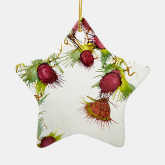 Butterfly on Red Berries Ceramic Star Decoration