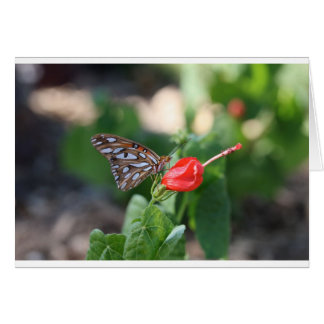 Butterfly on Red Bloom Card