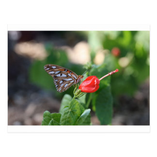 Butterfly on Red Bloom Postcard