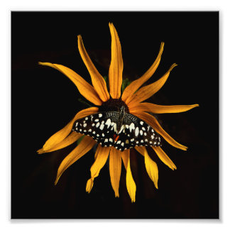 Butterfly on Sunflower Photo Print