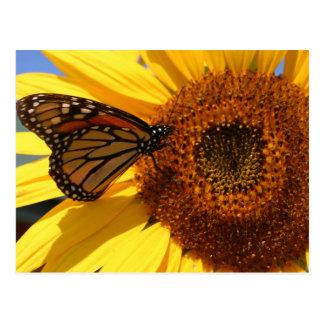 Butterfly on sunflower postcard