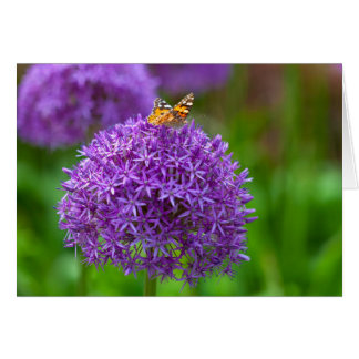Butterfly on the Allium flower Card