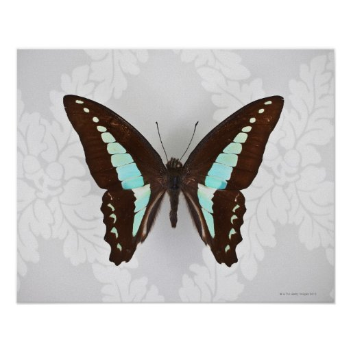 Butterfly on wallpaper background posters