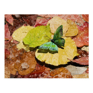 Butterfly on wet autumn leafs postcard