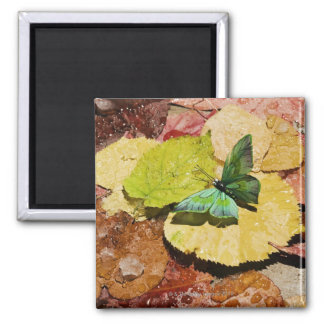 Butterfly on wet autumn leafs square magnet
